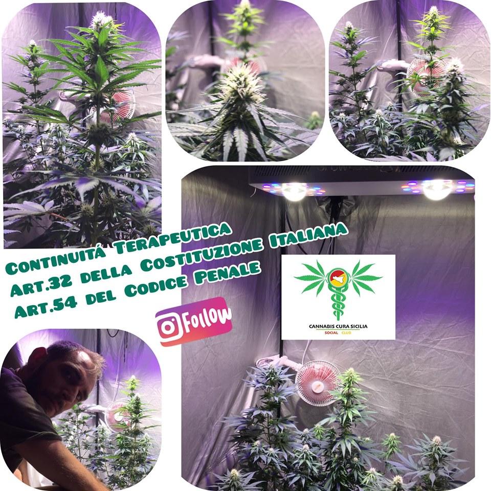 cannabis-disobbedienza-civile